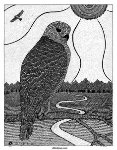 Hawk, 11x14, black pen on paper