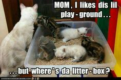 From the amount of litter outside the box makes me think my kitties use it as their sandbox.