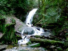 Coal Creek Falls on Cougar Mountain near Issaquah.  Roundtrip 	2.5 miles Elevation Gain	350 ft Highest Point	1000 ft