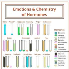 The hormones in the different emotions. - The hormones in the different emotions. Pseudo Science, Brain Science, Life Science, Stress And Depression, Pineal Gland, Psychology Facts, Health Psychology, Behavioral Psychology, Psychology Major