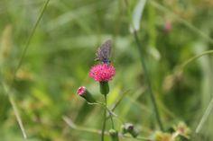 Pequena borboleta