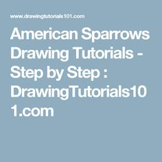 American Sparrows Drawing Tutorials - Step by Step : DrawingTutorials101.com