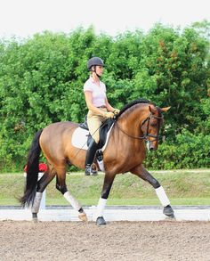 Keep the Inside Leg Honest by Courtney King-Dye | Dressage Today I remember working for Hampton Green Farms, miss that place so much!