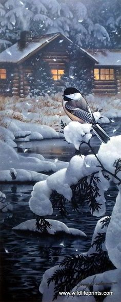 In Jerry Gadamus's print Cabin Creek Chickadee, a cute little bird sits on a snow-covered pine tree, quite a contrast to the warmth of the cozy log cabin. Christmas Scenes, Christmas Art, Fotografia Macro, Winter Magic, Winter Snow, Winter Scenery, Snow Scenes, Wildlife Art, Christmas Pictures