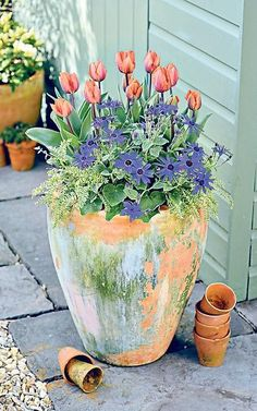 The best spring pots to brighten up your garden Table Flowers, Terracotta Pots, Container Plants, Potted Plants, Garden Pots, Shrubs, Tulips, Planter Pots, Spring