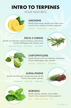 Our favorite terpenes naturally occurring in cannabis and their many benefits and uses.