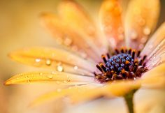 yellow flower by Lisa Bettany {Mostly Lisa}, via Flickr
