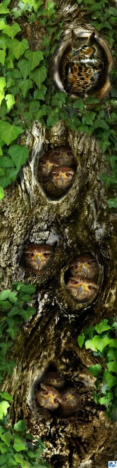 Owl tree hang out