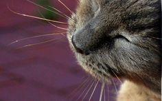 Czy kot może jeść karmę dla psów?