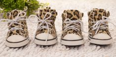 PUPPY LOVE COUTURE Love Couture, Leopard Dog, Dog Carrier, Outdoor Dog, Shoe Boots, Shoes, Small Dogs, Puppy Love, Converse Chuck Taylor