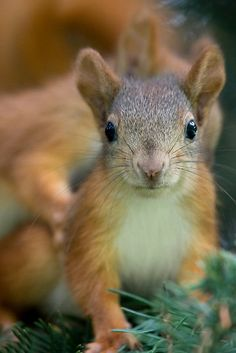 Baby Squirrel: I have never seen a squirrel I did not like.