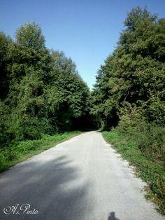 A passeggio nel bosco