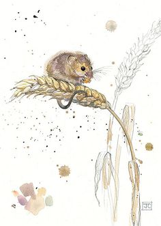 Harvest Mouse by Jane Crowther for Bug Art greeting cards.
