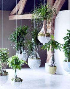 Hängende Pflanzen Kopfüber Deko Ideen Zimmerpflanzen   Pflanze ... Haus Mit Wintergarten Zimmerpflanzen Als Dekoration Szene Setzen