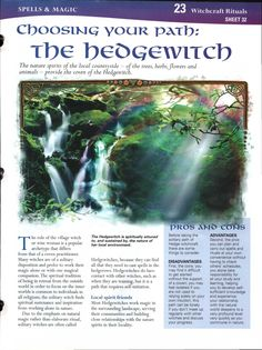 Choosing Your Path: The Hedgewitch
