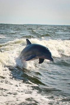 Dolphin can be sited off St Augustine beaches, too. George Island Photos - Featured Images of St. Florida Vacation, Florida Beaches, Vacation Rentals, Florida Sunshine, Sunshine State, Florida Wallpaper, Florida Dolphins, Christian Retreat, Saint Augustine Beach