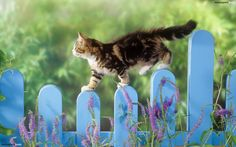 Oh, I see one of the kittens going over the gate....must be hiding from Bonnie & Buster....Or visiting everyone at the picnic.............