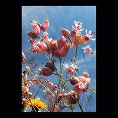 flowers – by © peter gartmann + sabina roth – art photography – art book – www.petergartmann.com – www.sabinaroth.com – switzerland – collection www.susanneminder.ch #petergartmann #susanneminder #sabinaroth #guggenheim #centrepompidou #tatemodern #tate #moma #mumok #museumludwig #whitneymuseum #sfmoma #museumofmodernart #stedelijkmuseum #massmoca #palazzograssi #artbasel #artbaselmiami #fondationbeyeler #kunsthauszürich #foto_museum #zeitgenössischekunst #contemporaryartwork #photoartwork Moma, Museum Ludwig, Art Basel, Centre Pompidou, Switzerland, Art Photography, Flowers, Painting, Collection