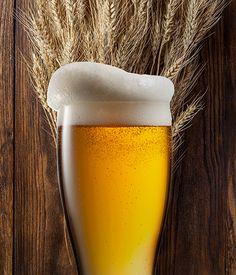 American Wheat Homebrew Beer