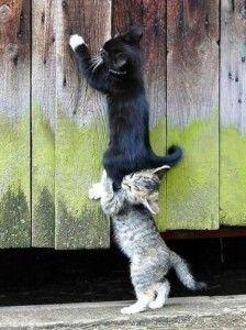 Comment ne pas tomber en amour avec ces petites bêtes-là ? Voici une belle preuve de détermination et d'amour <3 !    Trouvé sur : www.agirlsrighttodream.tumblr.com