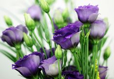 Passion for a bunch of Purple Lisianthus in my room