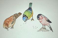 Les oiseaux ~ La petite vie d'Ilhan et Mélia (ou la vie sans école)