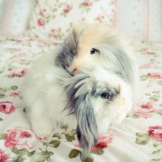 Bunnies for Bunnies