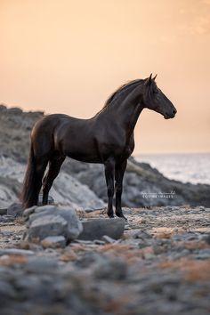 A beautiful black horse never has a black heart - ANONYMOUSE FREE - - Een mooi zwart paard heeft nooit een zwart hart A beautiful black horse never has a black heart Most Beautiful Horses, All The Pretty Horses, Animals Beautiful, Cute Animals, Cute Horses, Horse Love, Black Horses, Wild Horses, Horse Photos
