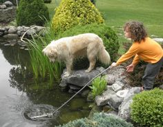 dog and child with pond