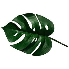 love the shape of the monstera leaf- it's a fab silhouette google it for more images