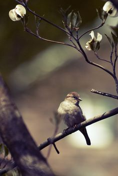 sparrow...love these little guys