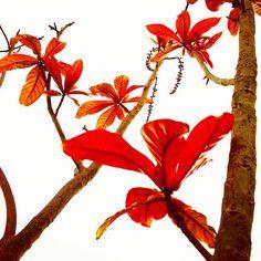 Red Leaf Light