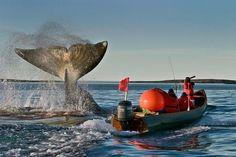Inuit bowhead whale hunt