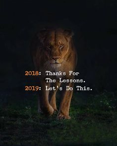 2018 - Thanks for the Lessons - 2019 - Let´s do do this - Motivation - Mindset Words Quotes, Me Quotes, Motivational Quotes, Inspirational Quotes, Sayings, Qoutes, Lion Quotes, The Words, Great Quotes
