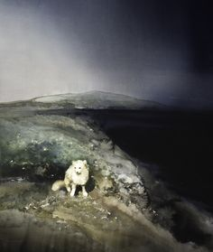Lars Lerin / Fjällräv, Arctic fox / I love his work. Was lucky enough to see an exhibit recently. Watercolor Fox, Watercolor Artists, Watercolor Techniques, Watercolor Landscape, Landscape Paintings, Watercolor Paintings, Watercolors, Illustrations And Posters, Animal Paintings
