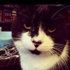 My cat Kramer.