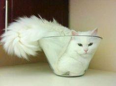 Gatos são flexíveis? TUDO MENTIRA! E nesse post você entenderá bem o porque disso, pois na verdade os gatos são líquidos peludos, com orelhas, olhos, ca
