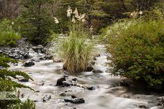 flora patagonica..