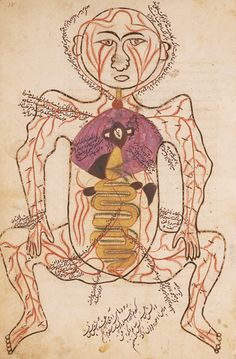 Mansur ibn Ilyas - 14th-century. This page depicts the arteries, with the internal organs shown in watercolors.
