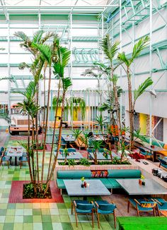 Amazing: Madero café in guatemala with tropical planting