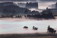 Morning fog glows above the Alpine foothills near Bernbeuren,...