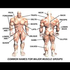 Common names for Muscle Groups