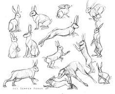 Sketches - Hares/Rabbits by SemperFerus.deviantart.com on @DeviantArt