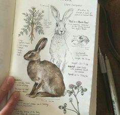 Art Sketches, Art Drawings, Animal Drawings, Custom Journals, Art Journals, Journal Art, Science Journals, Diet Journal, Artist Journal