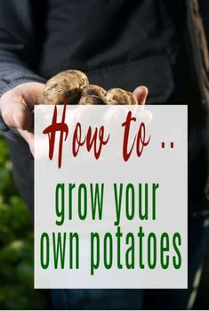 How to grow your own potatoes with these simple tips - whether you fancy growing poatoes in containers or beds or bags this is a great beginners guide Growing Potatoes In Bags, Grow Potatoes, Planting Potatoes, Growing Green Beans, Growing Greens, Frugal Family, Family Budget, Life On A Budget, Kitchen On A Budget
