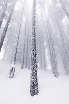 I am sharing some interesting snow images of the winter 2017 with you. and especially the latest 2018 photographs. great photography of winter like fog photography, iceberg photography and snowfall photography (Snow Images). I Love Snow, I Love Winter, Winter Snow, Winter Time, Winter Season, Winter Christmas, Snow Fun, Winter Schnee, Snow Images
