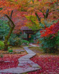 Beautiful Places In Japan, Beautiful Birds, Autumn Leaves Japan, Autumn Scenery, Autumn Aesthetic, Japanese Architecture, Fall Pictures, Beautiful Buildings, Japanese Culture