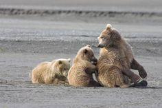 Adorable bear family
