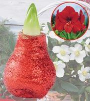 Amaryllis Glitter Red 1 kpl