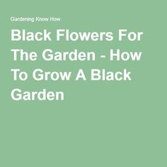 Black Flowers For The Garden - How To Grow A Black Garden
